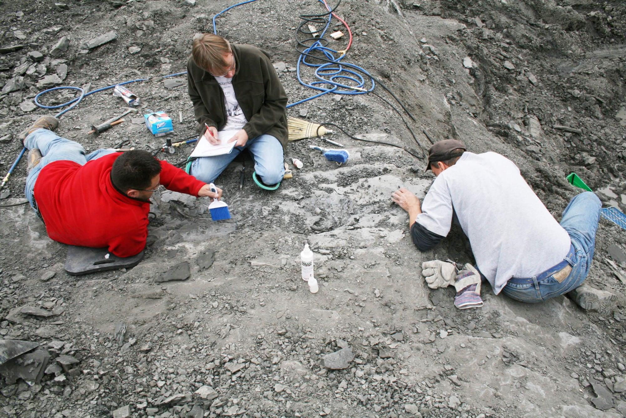 Craving adventure? Put on your traveler's hat, grab a tool, and dig for fossils like an amateur paleontologist