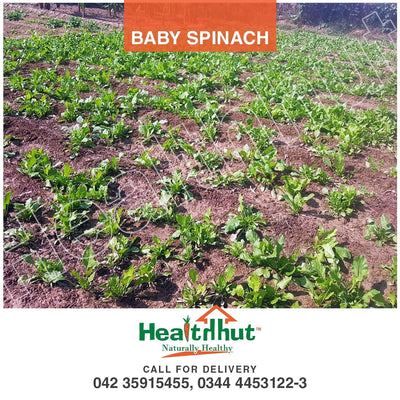Daily Harvested Fresh  Spinach