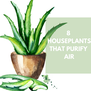 8 Houseplants That Purify Air