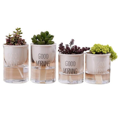 4 self watering planters with assorted plants and the words 'good morning' printed on the glass