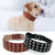 Studded Genuine Leather Collar