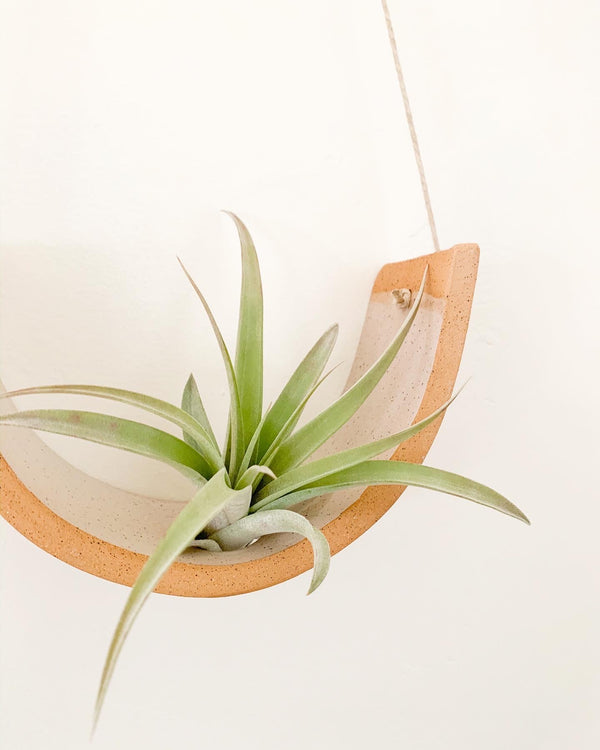 Speckle Buff Air Plant Cradle