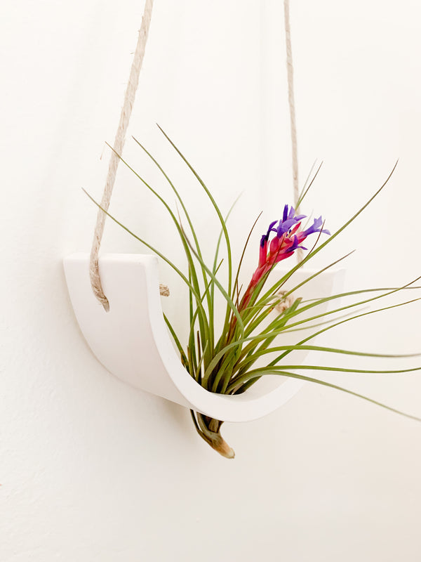 White Earthenware Air Plant Cradle