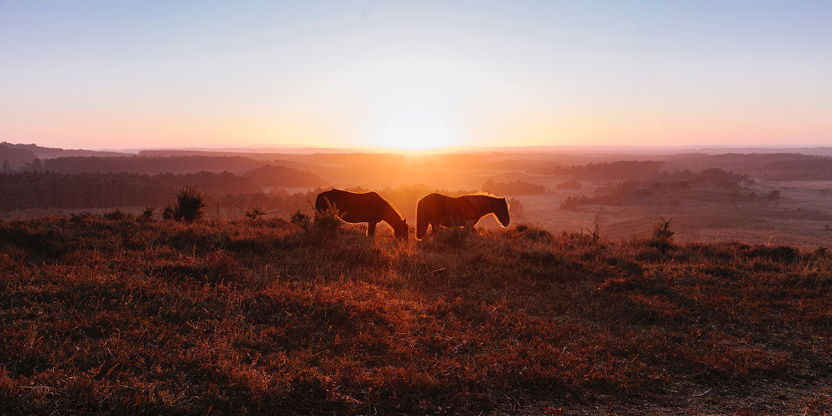Escape the City to the New Forest