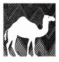 Camel Culture Home and Lifestyle