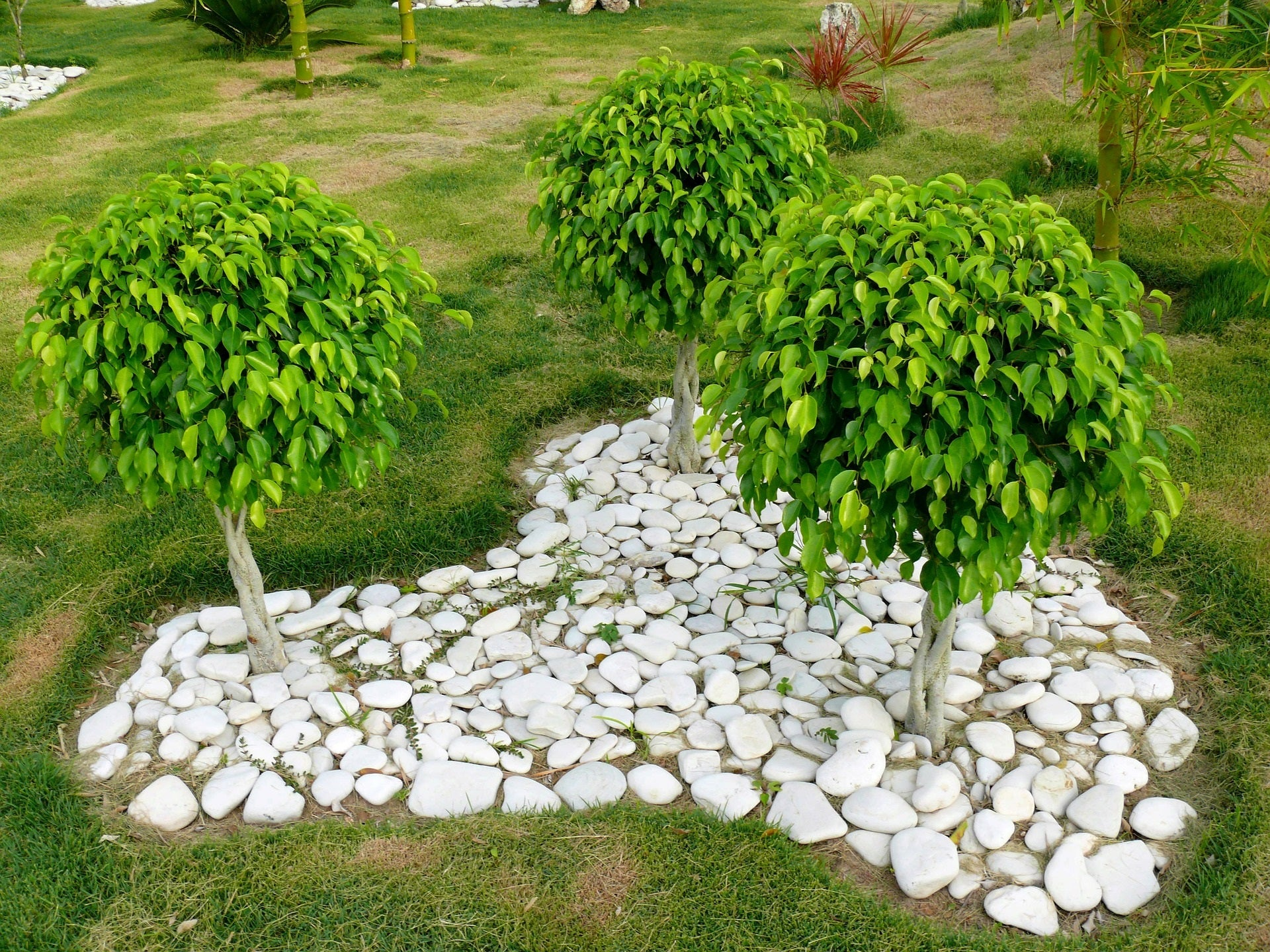 Taking Care of Ficus Benjamina: What to do with Insects & Fungal Diseases