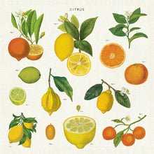 Load image into Gallery viewer, Citrus Set of 4 Cloth Napkins