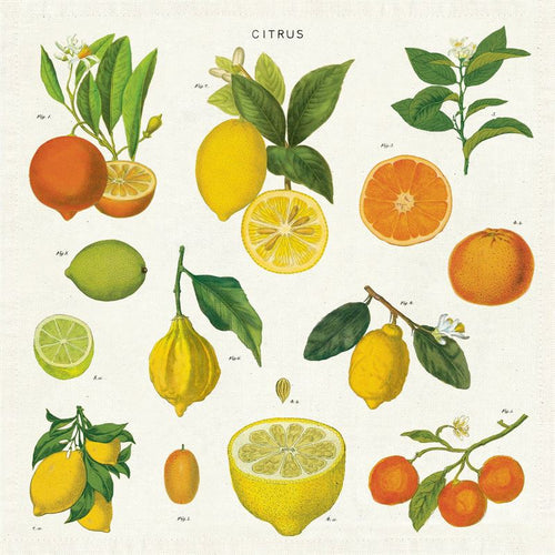 Citrus Set of 4 Cloth Napkins
