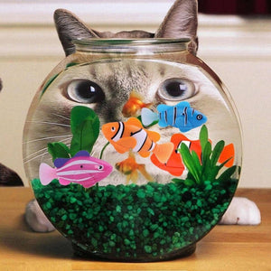 Robotic Fish Cat Toy - Watch Destination