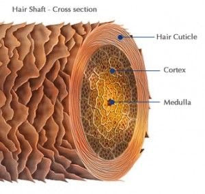 How to find and care for your hair porosity
