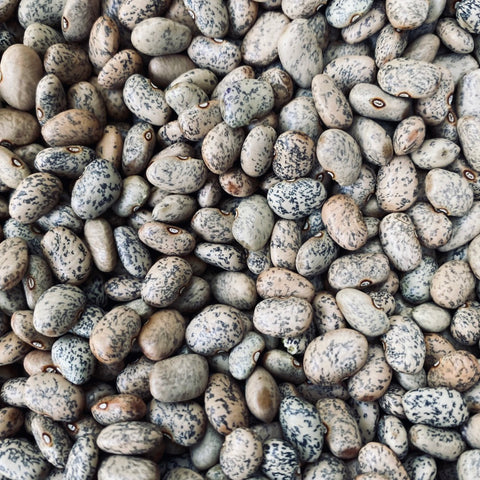 blue speckled tepary beans
