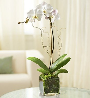handmade-global-crafts - Elegant Orchid - White