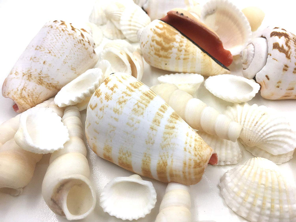 handmade-global-crafts - Seashells base filler white with Hawaiian tropic fragrance oil 12 oz box