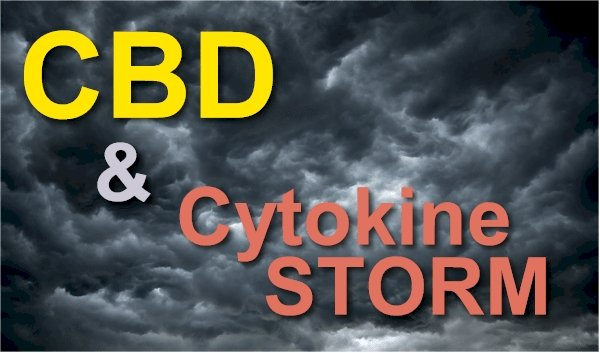 Can CBD Help With Viral Cytokine Storm?