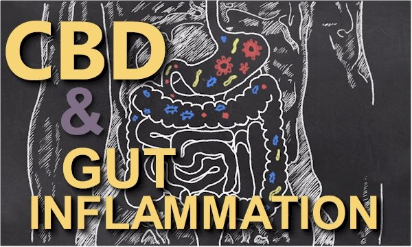 Can CBD Help With Gut Inflammation