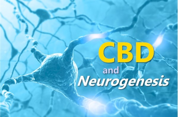 Can CBD Stimulate Hippocampus Neurogenesis for Anxiety (and other issues)?