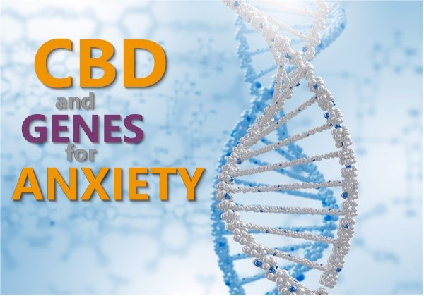 CBD and the Genes for Anxiety