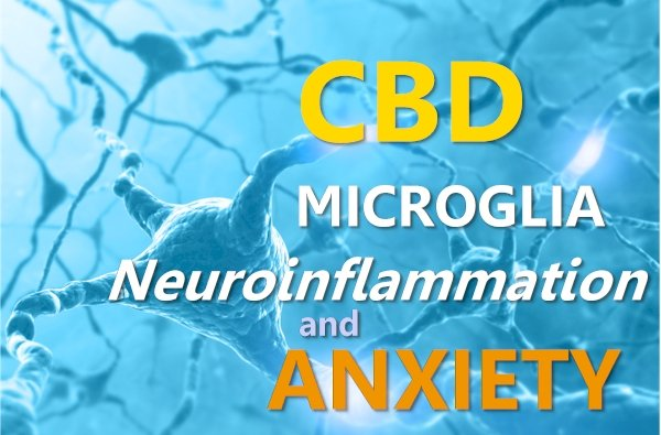 CBD, Microglia, Neuroinflammation, and Anxiety