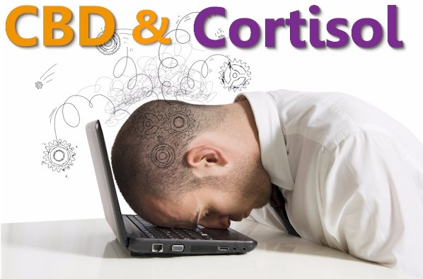 Does CBD Reduce Cortisol for Stress and Anxiety