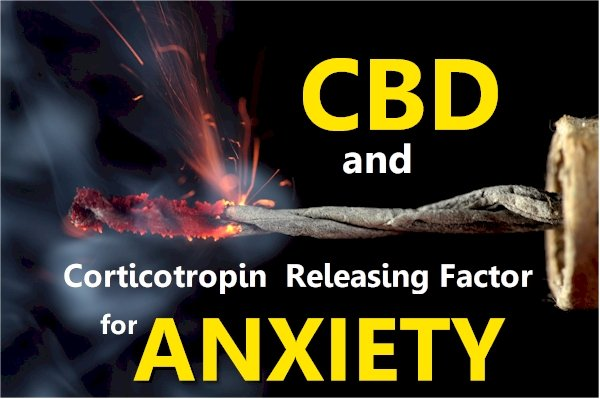 How CBD affects CRF (Corticotropin Releasing Factor) and Anxiety