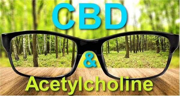 How Does CBD Affect Acetylcholine - New Research on the Best Kept Secret Neurotransmitter