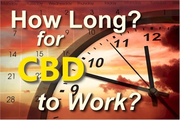 How Long Does It Take CBD to Work - Research on Short and Long Term Effects