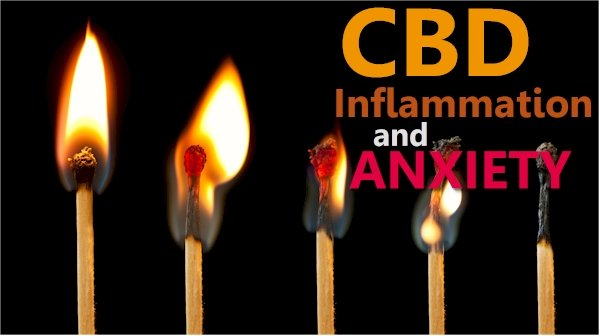 Inflammation, Anxiety, and CBD