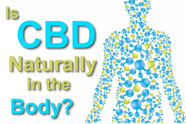 Is CBD Naturally Occurring In The Body?