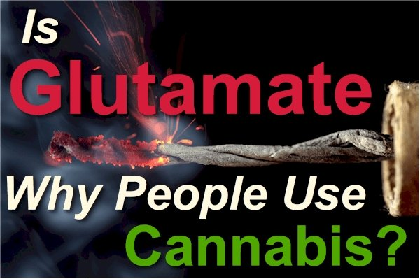 Is Glutamate the Reason People Chronically Use THC and Cannabis Daily?