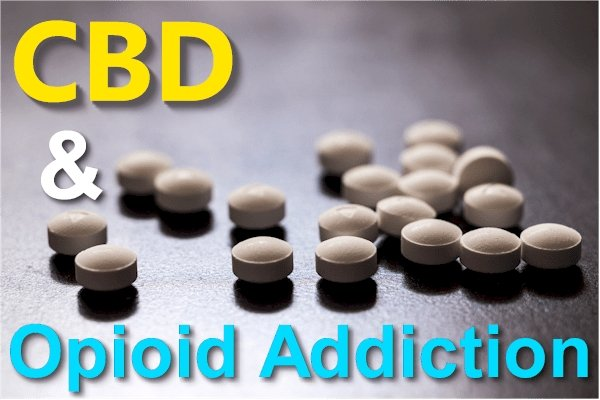 New Research on CBD and Opioid or Heroin Addiction, Withdrawal, Tolerance, and Recovery