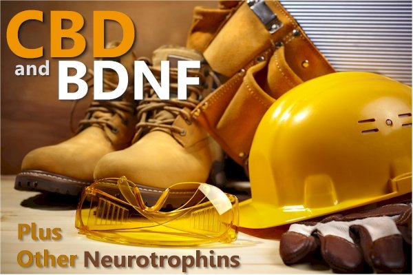 Research on CBD and Neurotrophins like BDNF and NT-3 for Anxiety