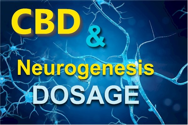 Research on CBD Dosage for Neurogenesis