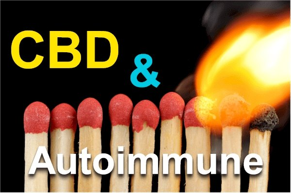 Updated Research on CBD and the Pathways of Autoimmune Disease