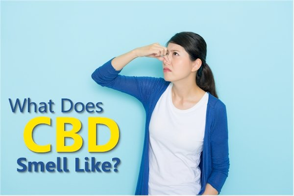What Does CBD Smell Like?