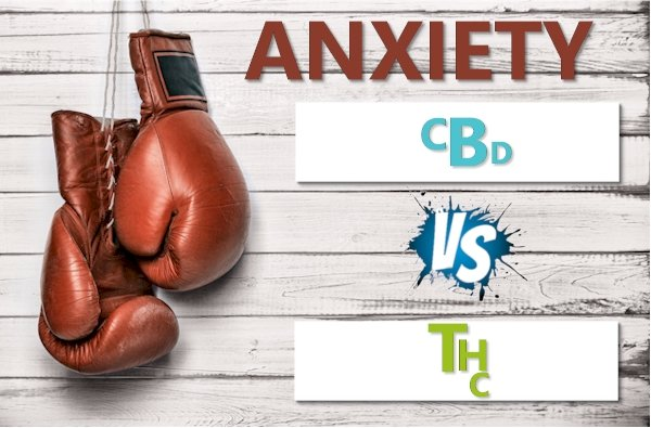 What Research Says About Weed or THC versus CBD for Anxiety