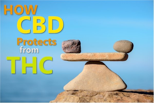 Why CBD is a Must if You Use THC and Weed