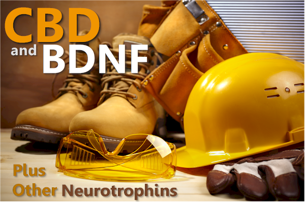 CBD and BDNF neurotrophins