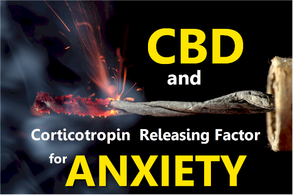 cbd and corticotropin releasing factor for anxiety