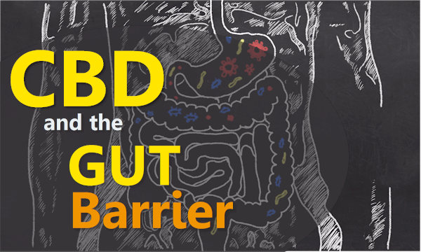 cbd and leaky gut barrier