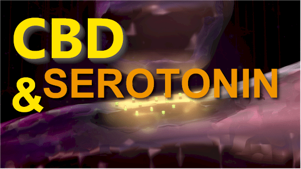 CBD and serotonin