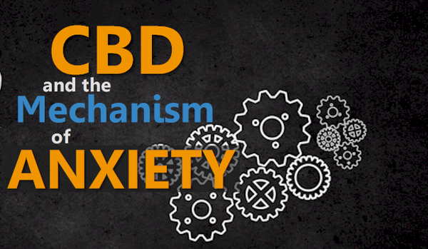 CBd and the mechanism of anxiety