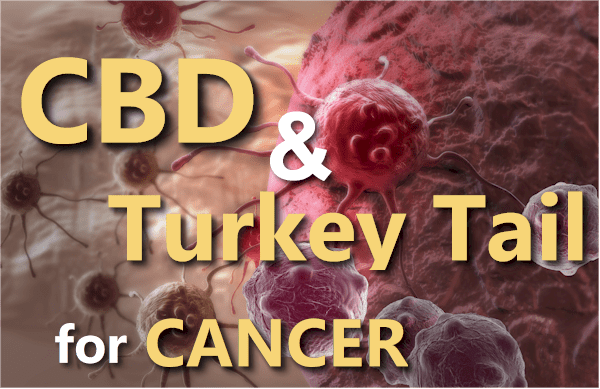 CBD and turkey tail for cancer