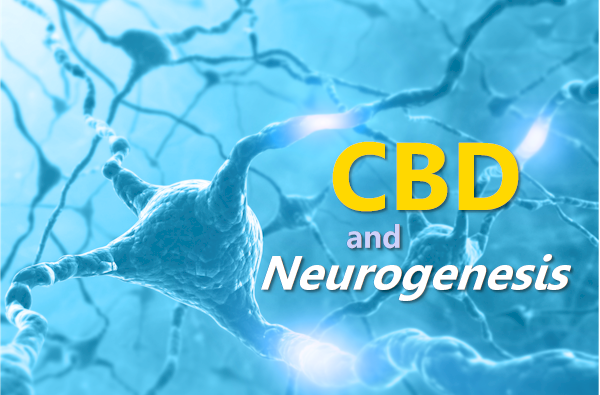 cbd for neurogenesis and brain repair