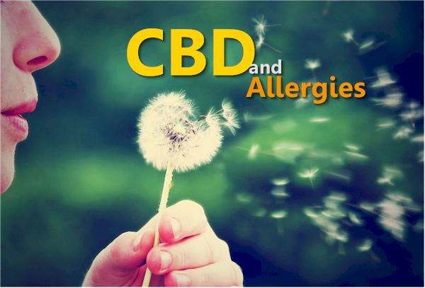 CBD and Women's Allergies - Histamines
