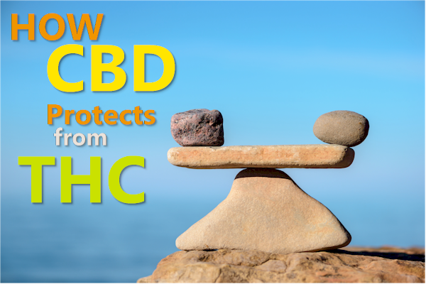 how cbd protects against thc effects