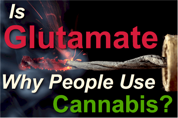 Is Glutamate why people use cannabis or THC chronically