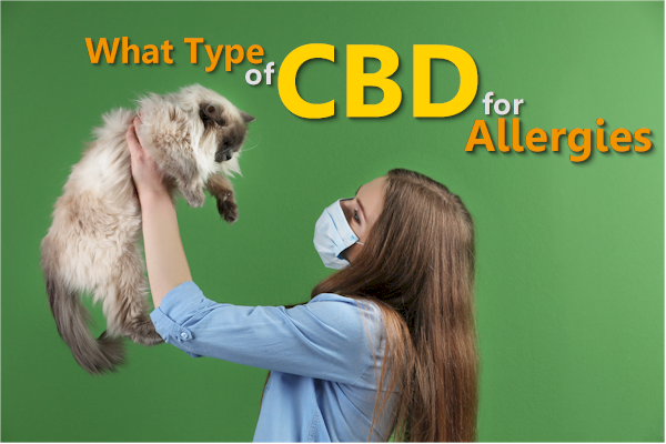 take cbd isolate for histamine and allergy issues