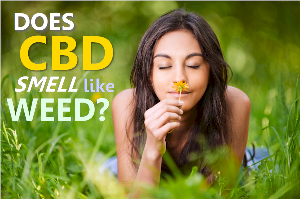 should cbd smell like weed