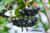 Aronia Berry Harvest in Local News 1011 NOW