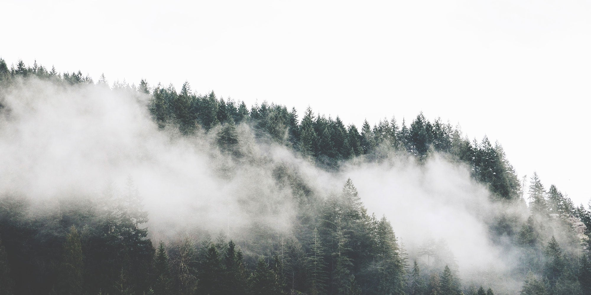 Moody clouds and trees in a Pacific Northwest forest.